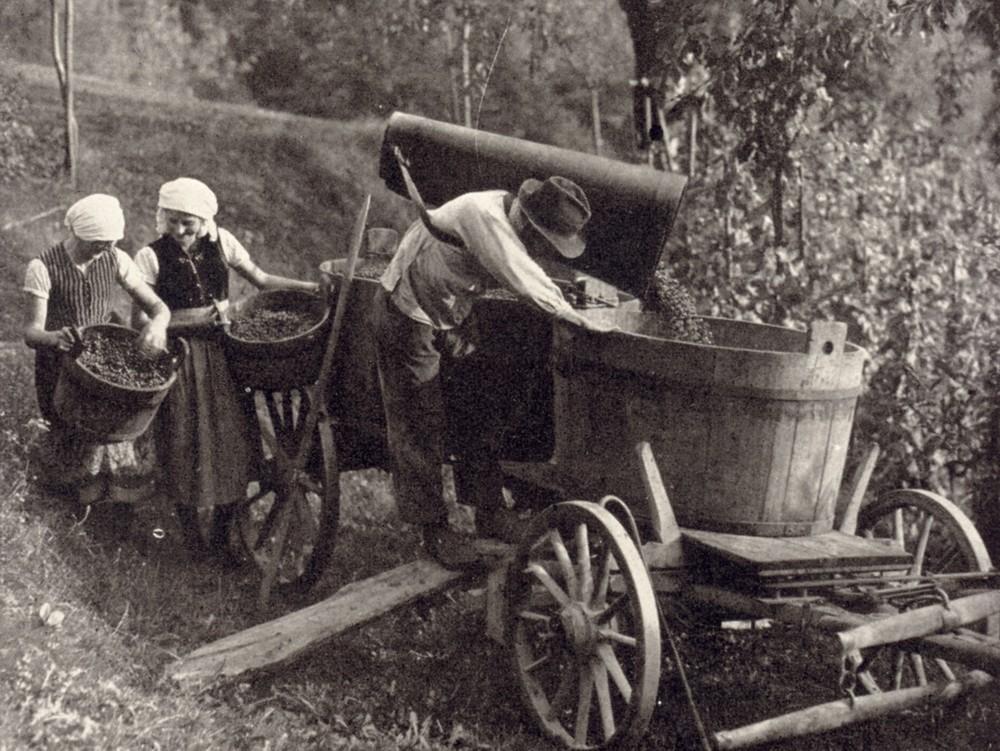 Weinbau Historische Aufnahme