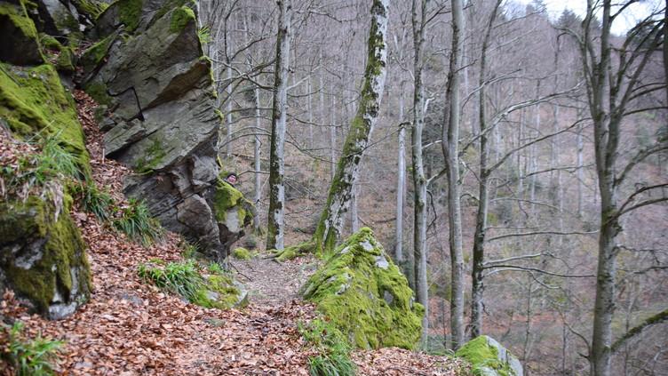 Der Verlauf des historischen Urgrabens lässt sich am Gullerbühl gut erkennen.