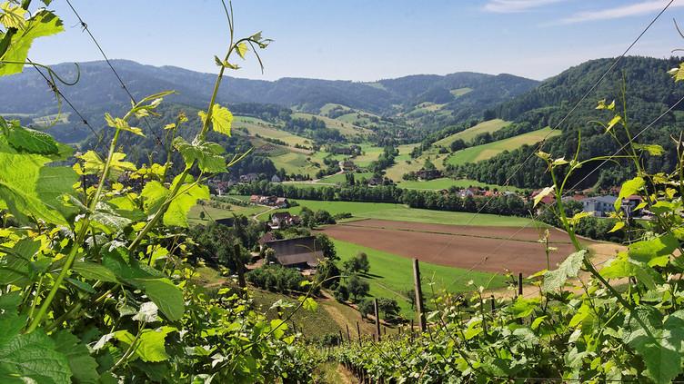 Ausblick vom Wissereck in das Föhrental