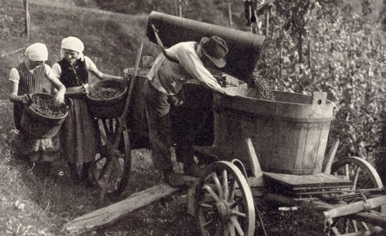 Beim Herbsten in Glottertal um 1935